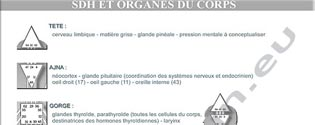 planche_organes315x125px